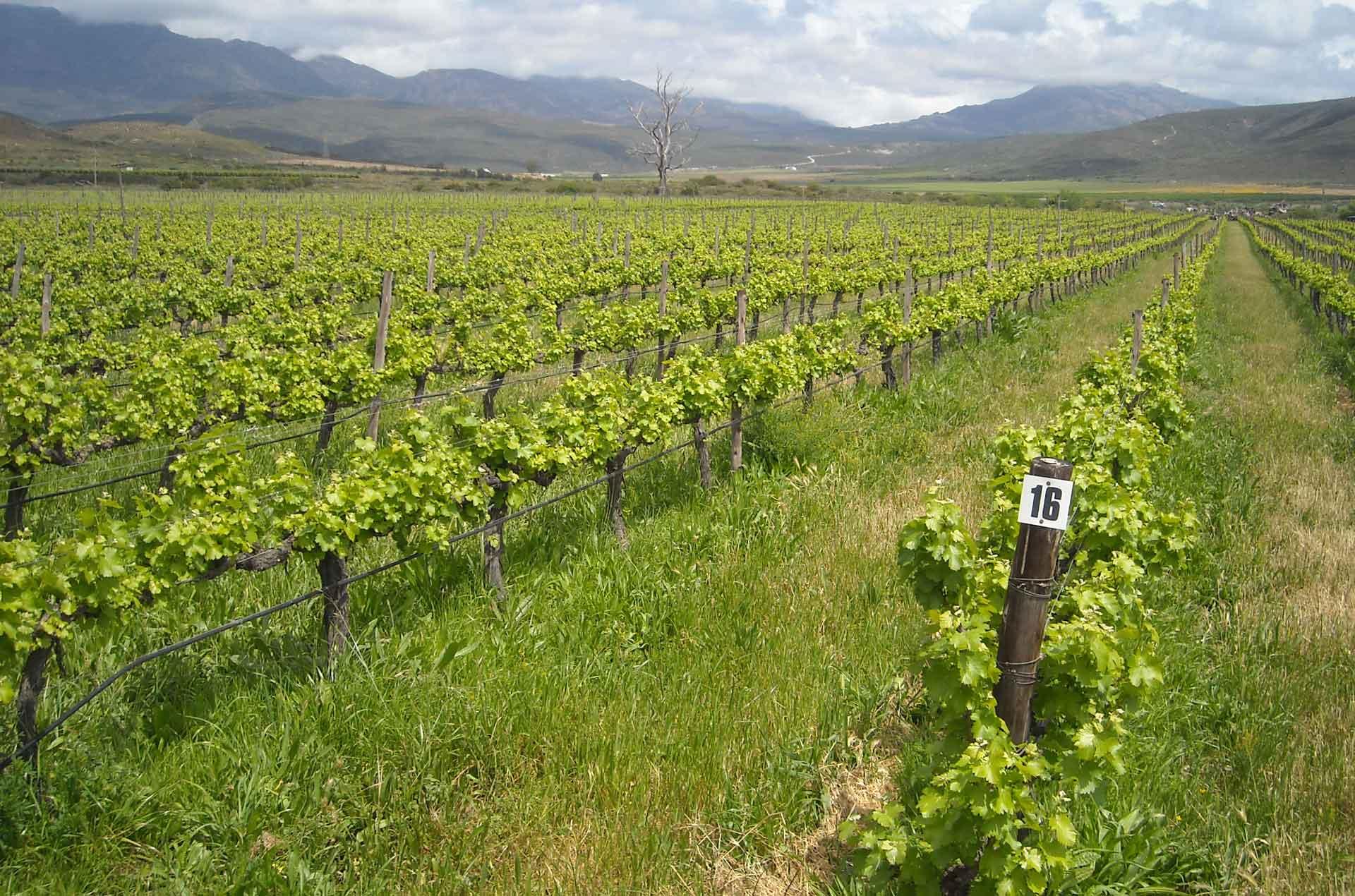 Solara Organic Wines | Conservation | Natural Fynbos ...