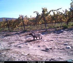Houtbaai Farm - Recently caught on camera
